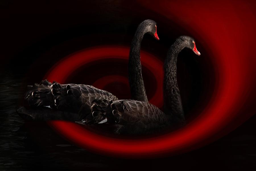 Black Swan Event Coronavirus